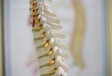 Human backbone model