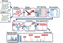CARM1 protein target identification process